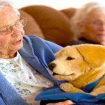 Tombot, el perro robot para ancianos y niños